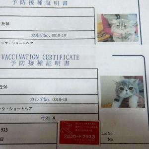 ぽんず&つばさ2回目のワクチン摂取しました!