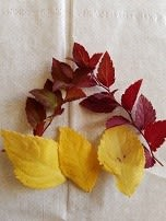 ベランダのミニ紅葉