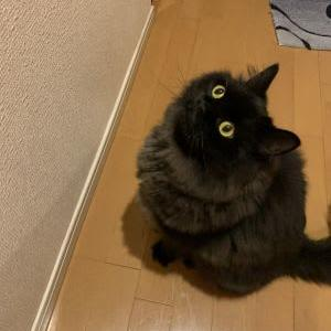 猫にどっきり