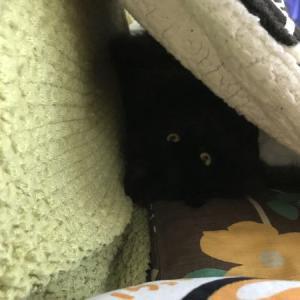 レオにとっての暖房