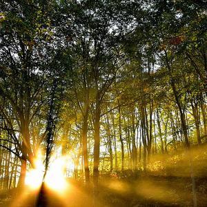 森の朝景色