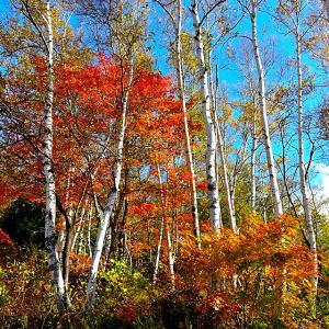 秋山郷「紅葉狩り」