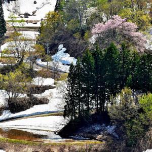 雪国の春(棚田の里)