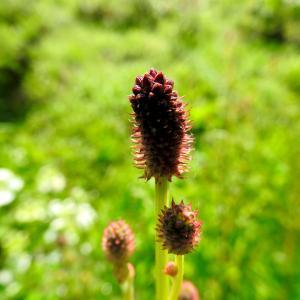 里山に咲く