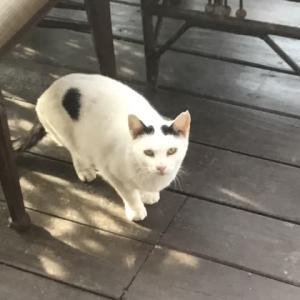 長岡式酵素玄米ご飯を食べる地域猫