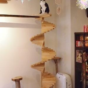 鼻にワンポイントの黒白猫2(新橋・いやし亭ほご猫茶屋)