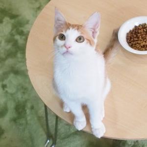 茶白の仔猫ちゃん(向島・CATS&DOGS CAFE)