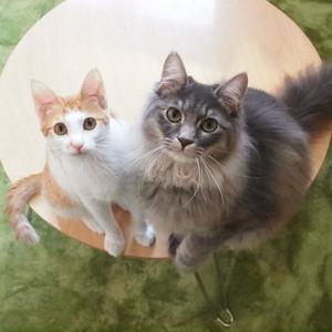 保護猫たちの集合写真特集3(向島・CATS&DOGS CAFE)