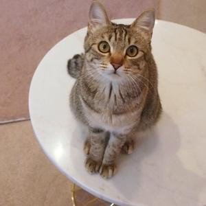 キジトラのお嬢ちゃん2(都立大学駅・CAT LIVING)