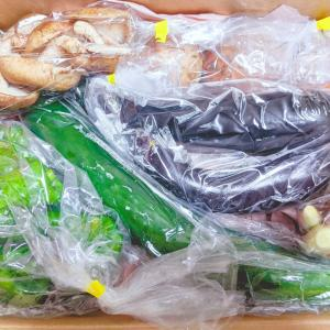【ネタバレ】季節のおまかせお試し野菜セット:ばみや / 他、お買い得pickup!半額鯖みぞれたらみパスタ北寄貝etc…