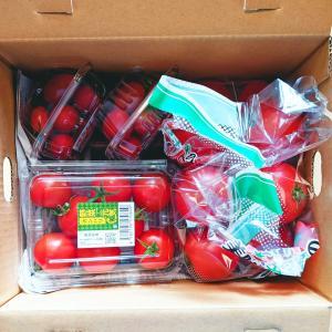 【レポ】トマト3種食べ比べよくばりセット:愛食コーナー / お買い得pickup!半額ブルーベリージューストッピングシュガー揖保乃糸etc…