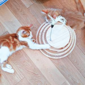 【レポ】仔猫はこのおもちゃ大好きやで~♪【動画有】