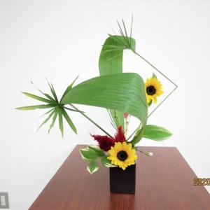 シペラスの線とカークリコの面・・面白い自由花