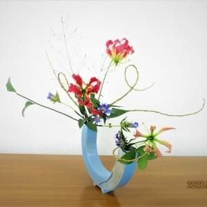 ヤナギの曲線とグロリオーサ・・楽しい自由花