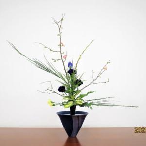 ボケ・エニシダの立花