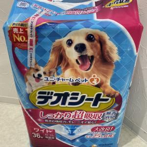 先生!とうとう寂しさから犬を飼い始めたんですか!!!え?