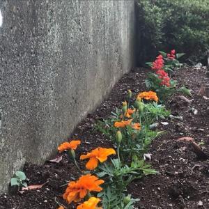 夏の花壇に代りました