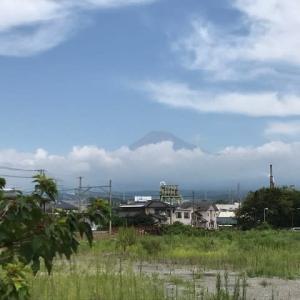 富士山しらす街道