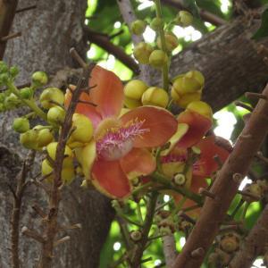 タイのお寺で見たまるで極楽に咲いているような花