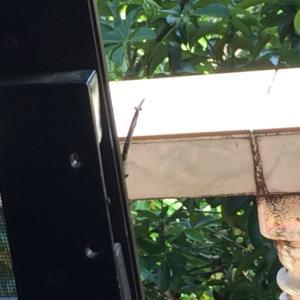 初めて我が家に現れた妖怪を見て!(虫)