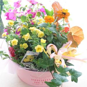 最近のお花たち(鉢物)