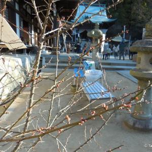 八栗寺で(3)