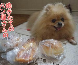 ひさびさメロンパン(今日は写真です)