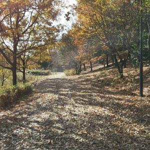 お散歩@愛知健康の森