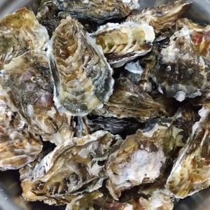 伊勢のお土産 おかげ横丁松山海産店の牡蠣