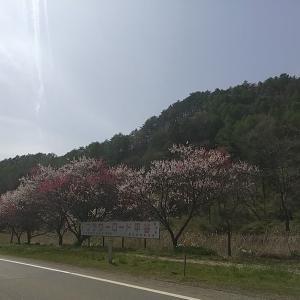 長野県下伊那郡平谷村