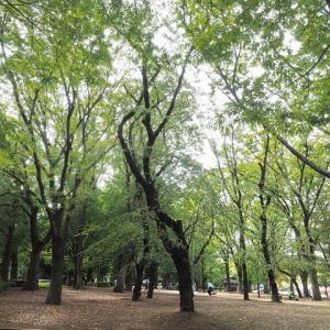 上野公園の樹木が秋色になって来ました その4