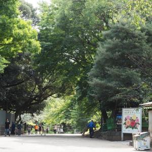 上野公園の樹木が秋色になって来ました その5