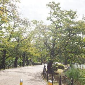 上野公園の樹木が秋色になって来ました その6