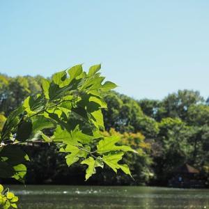 石神井公園にも初秋が その3