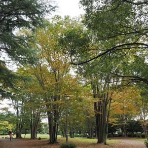 季節らしい色になって来た野川公園です 其の1