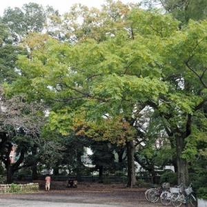 善福寺公園にも秋到来です その1