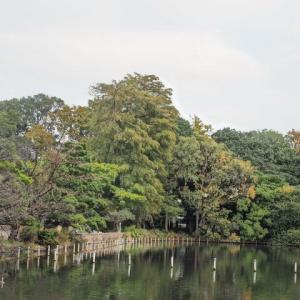 善福寺公園にも秋到来です その2