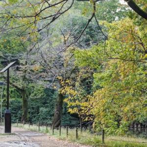 善福寺公園にも秋到来です その3