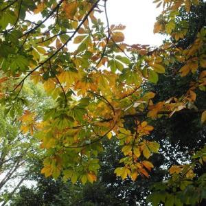 善福寺公園にも秋到来です その4