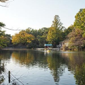 色鮮やかな武蔵関公園です その2