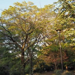 色鮮やかな武蔵関公園です その5