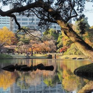 『深山紅葉を楽しむ』小石川後楽園です その3