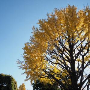 朝晩が冷えてきた神代植物公園の秋景色 その1