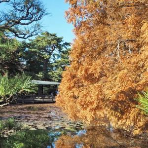 朝晩が冷えてきた神代植物公園の秋景色 その2