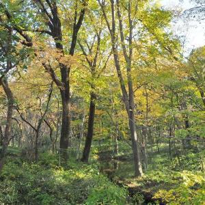 朝晩が冷えてきた神代植物公園の秋景色 その3