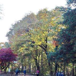 朝晩が冷えてきた神代植物公園の秋景色 その4