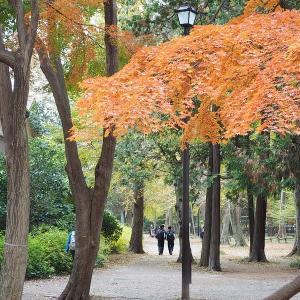 紅と黄色が競う華やかな井の頭公園です 其の2