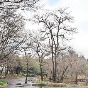 春まだ遠し石神井公園 その1