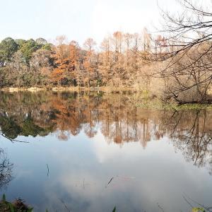 春まだ遠し石神井公園 その3
