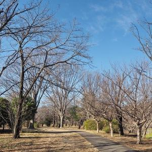 樹木が寒そうな武蔵野公園 其の3